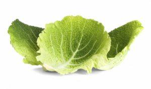 Капустный лист
