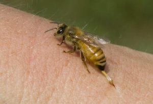 Пчелиное жало