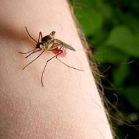 аллергия в виде укусов