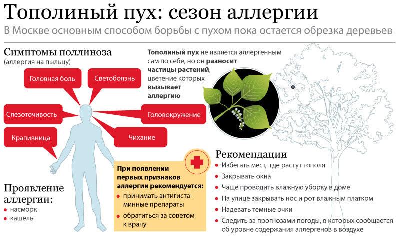 Тополиный пух инфографика