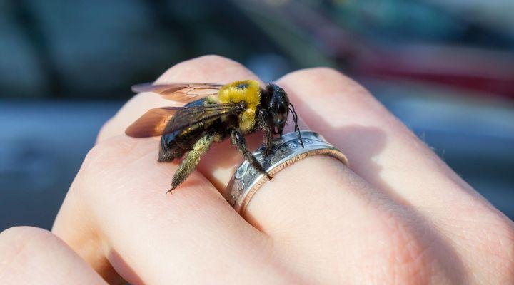 Аллергическая реакция на укус пчелы — Аллергия