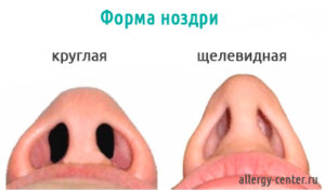 Форма ноздри