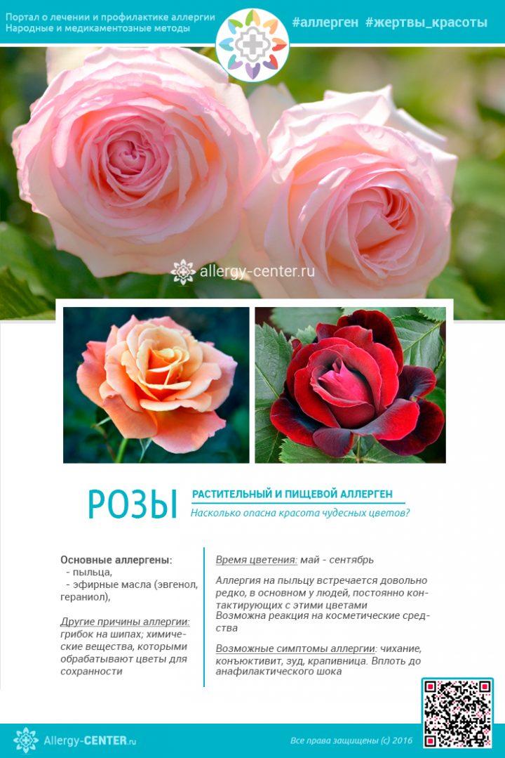 Карточка аллергена из статьи Существует ли аллергия на розы и как ее избежать