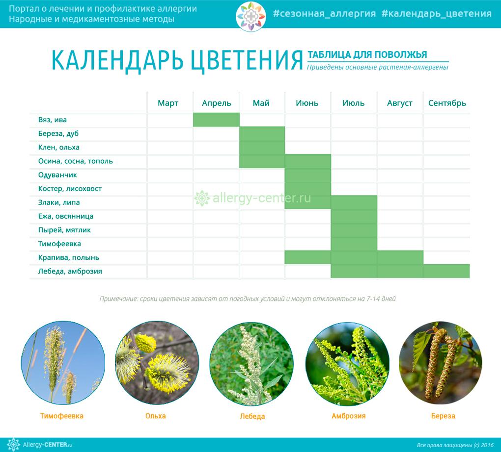 Календарь аллергиков для Поволжья