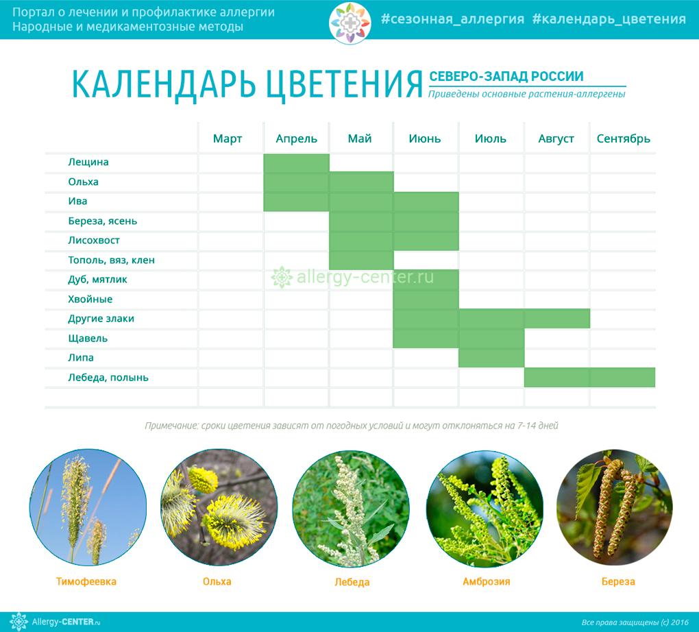 Календарь цветения для аллергиков Северо-Запада России