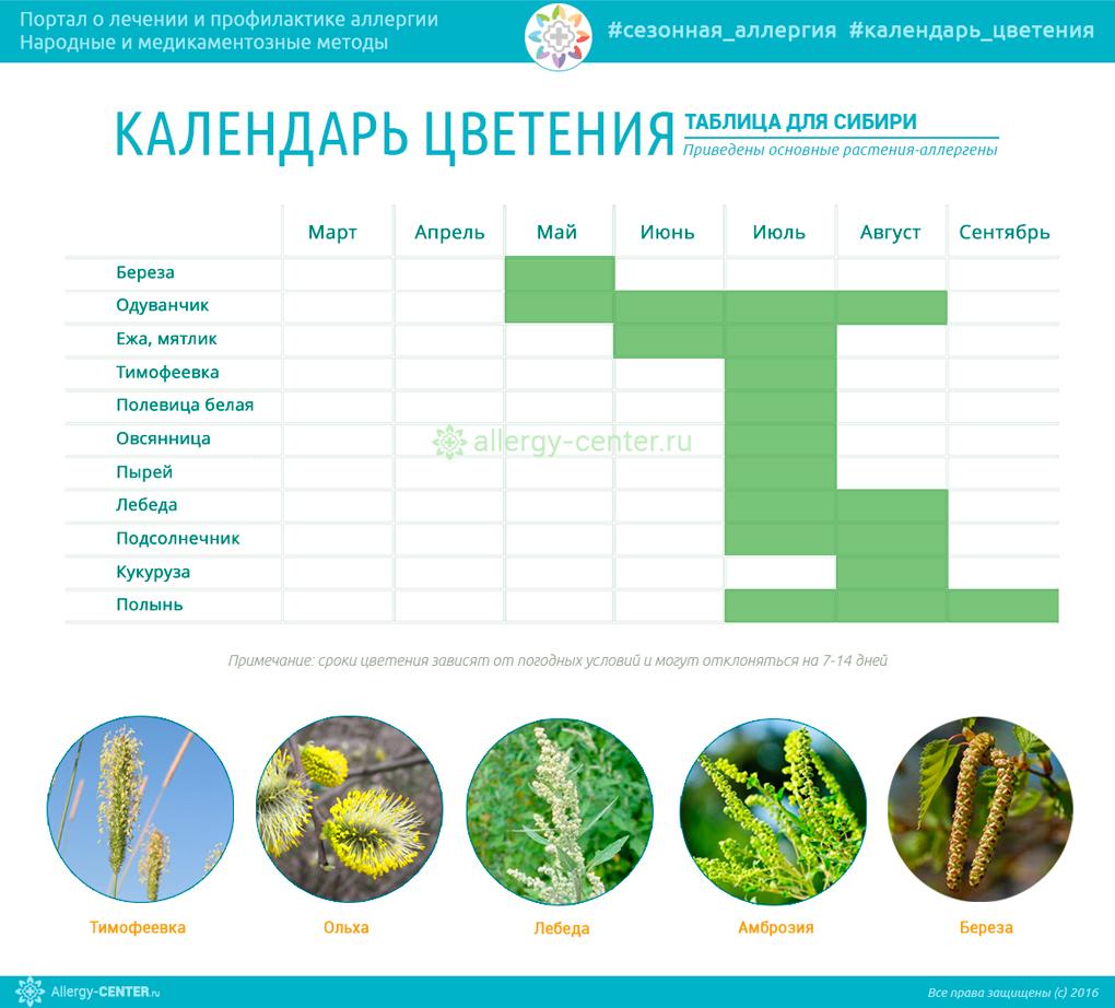 Календарь аллергии для Сибири