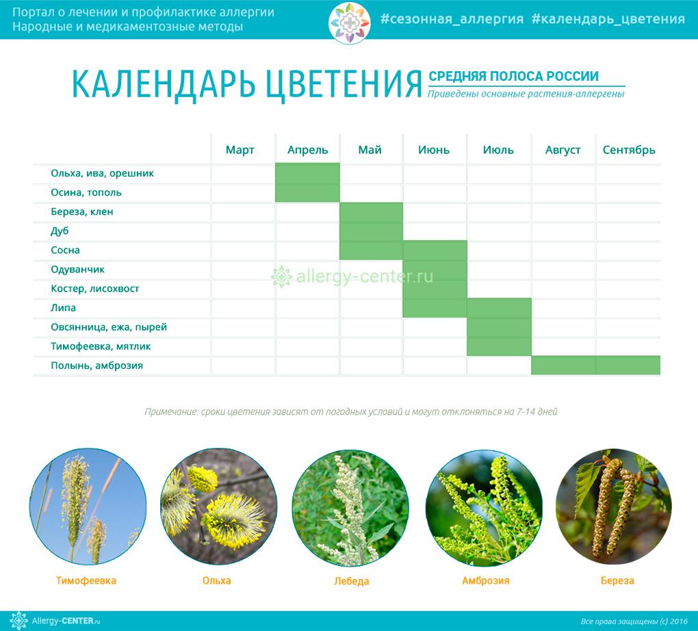 Календарь цветения для аллергиков Средней полосы России