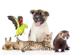 Домашние животные - сильный аллерген