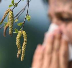 Аллергия на пыльцу березы
