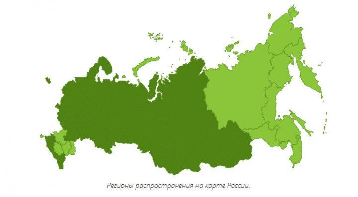 Регионы распространения березы