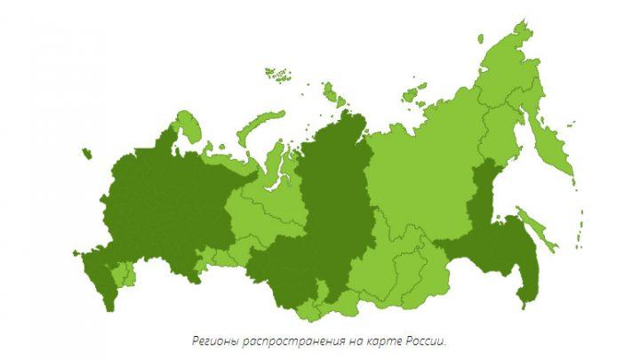 Регионы распространения липы