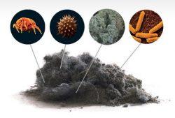 Состав домашней пыли