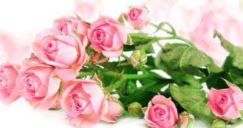 Миниатюра к статье Аллергия на розы - коварная красота