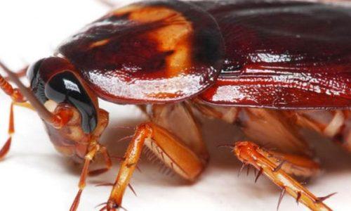 Миниатюра к статье Аллергия на тараканов — симптомы и возможности лечения