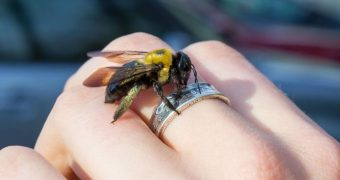 Миниатюра к статье Аллергия на укусы ос, пчел, шмелей и шершней - возможная опасность
