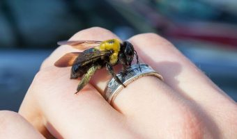 Миниатюра к статье Аллергия на укусы ос, пчел, шмелей и шершней — возможная опасность