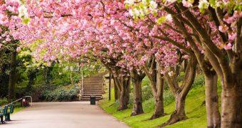 Миниатюра к статье Весна: время любви и… аллергии