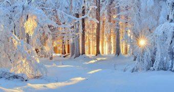 Миниатюра к статье Снежки, снеговики и… аллергия зимой