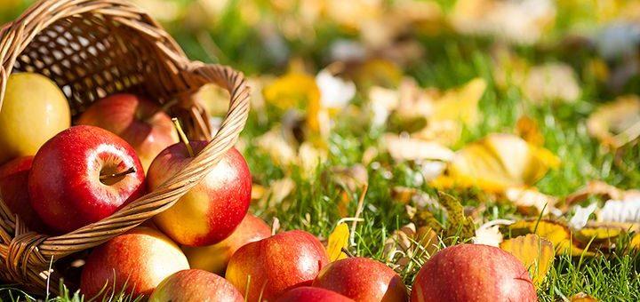 Миниатюра к статье Аллергия на яблоки — когда запретный плод совсем не сладок