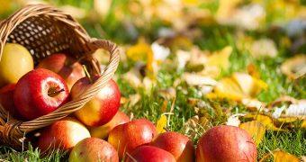 Миниатюра к статье Аллергия на яблоки - когда запретный плод совсем не сладок